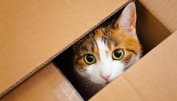 ¿Cómo hacer una mudanza con gatos? Consejos y recomendaciones